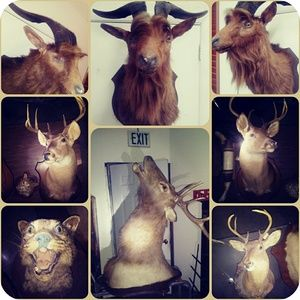 Taxidermy, mount,